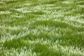 Tall Grass Seamless Texture More information Djekova