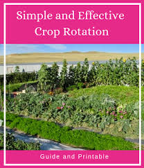 Simple And Effective Crop Rotation Rolling Hills Farm