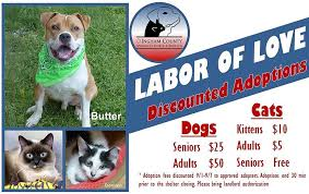 Image of: Anne Burns Discounted Dogs And Cats At Ingham County Animal Shelter 949 Wmmq Discounted Adoption Prices At Ingham County Animal Control