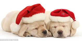 cute christmas puppies. Modren Cute Even The Coldesthearted Scrooge Would Have Their Heart Melted By These Adorable  Christmas Animals And Cute Puppies T
