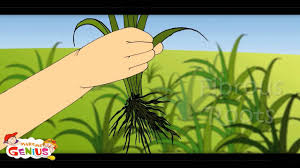 parts of plant lesson 1 kids cl 4 cl 5 grade 4 grade 5 students you