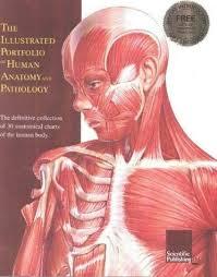 The Illustrated Portfolio Of Human Anatomy