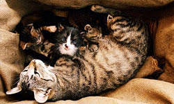 10 Tips for Bringing a <b>New Kitten</b> Home | Animal Planet