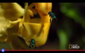 Giallo, strisce formato del fiore: La Straordinaria Sinergia Riproduttiva Dell Orchidea Con Secchio Incorporato Il Blog Di Jacopo Ranieri