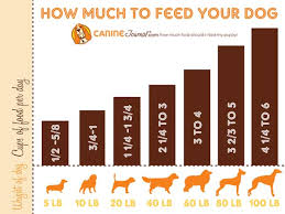 puppy feeding chart how much to feed puppy