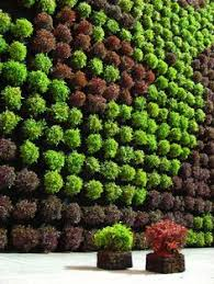 Small Picture outdoor wall planters living wall ideas vertical garden design