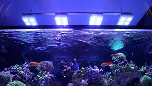 when i started into reef keeping the rule was get the brightest lighting possible end of story the most i have ever had on a tank was two 400w metal