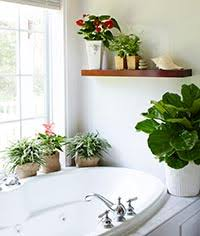 Growing plants in your bathroom (or shower) can make plant care a lot  easier. Most houseplants come from tropical regions where it's warm and  humid -- so ...