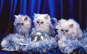 Winter Kitten Wallpapers - Top Free ...