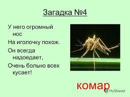 Презентация на тему Курсовая работа Сергиенко И А школа  6 Загадка 4 У него огромный нос На иголочку похож Он всегда надоедает Очень больно всех кусает комар