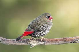 Meagan Fee   Lee's Birdwatching Adventures Plus