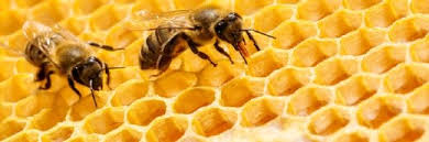 Oracle and <b>The</b> World <b>Bee</b> Project expand partnership <b>following</b> trials