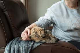 How To Care For <b>Dogs</b> In <b>Winter</b> | Battersea <b>Dogs</b> & Cats Home