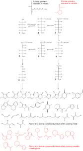 a schematic of the types of molecules created during the maillard reaction the lysine residues in meat s are the primary reactants and yield the