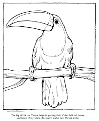 toucan animal coloring pages