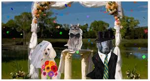 Build Your Own Wedding Ecard Starring Your Pets Ours Or Both Dress