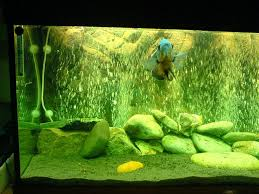 decoration bubble wall fish tank elegant com deluxe acrylic mounted w with regard to