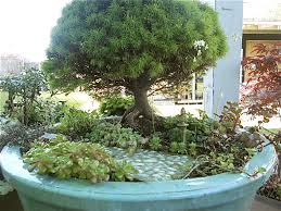bonsai gardens. miniature gardening and bonsai gardens