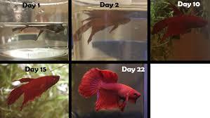 petco animals fish.  Petco Welcome To Reddit With Petco Animals Fish