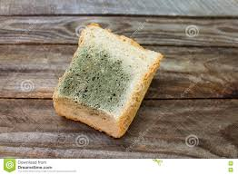 Old White Mold On Bread Stock Image Image Of Moldy 72821411