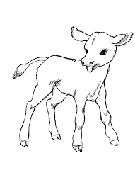 Small Picture Cow Coloring page Cute baby calf Coloring Book Pictures
