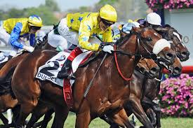 Image result for melbourne cup photos 2012