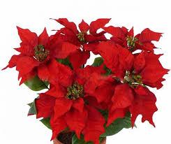 Kunst Weihnachtsstern Suniva Rot 45cm ø40cm
