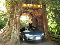 shrine drive thru tree view photos