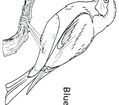 Eastern Bluebird Coloring Page And Coloring Pages For Birds Eastern