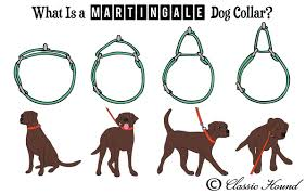 Image result for martingale leash