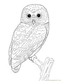 Printable Owl Coloring Page Coloring Pages Owl Birds Owl