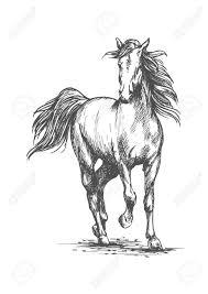 wild white horses running free. Wonderful Horses Stockfoto  White Horse Running Free Gait Intended Wild Horses Running Free R