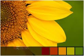 Analogous color scheme for Flower