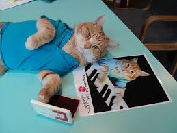 Pawtographed Keyboard Cat Pics Hit The ...