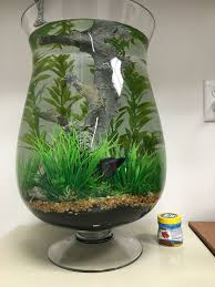 diy fish bowl decor betta fish bowl ideas aquariu on the best fish bowl decorations ideas