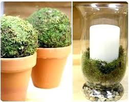 Moss Balls Wedding Decor New Moss Balls Decor Hobby Lobby Benefits Of The Ball Venyou