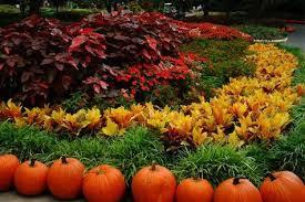 fall garden flowers. Chicago Landscaper Garden Service Fall Flowers C