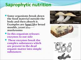 What Kingdoms Include Organisms That Are Autotrophic Or