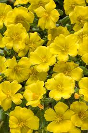 Best Color Yellow Garden Design Images On Pinterest Color