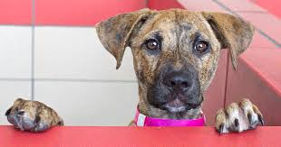 humane society dogs.  Society Come Meet The Amazing Dogs In Alpharetta On Humane Society Dogs K