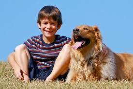 Canine Lymphoma Holistic Treatment Canine Lymphoma