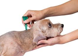 Flea and Tick Medicine Poisoning in Dogs | petMD