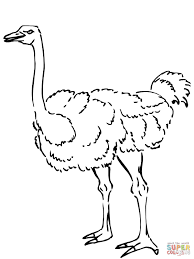 Small Picture Ostrich clipart coloring page Pencil and in color ostrich