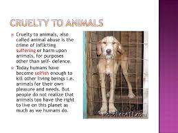 cruelty to animals 4