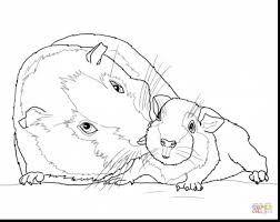 Small Picture astounding baby guinea pig coloring pages with pig coloring page