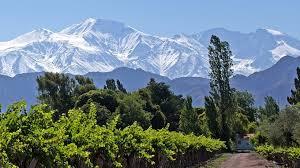 Elige el mejor camino de una manera sencilla y directa. Kultwein Malbec Aus Argentinien Vinovossum