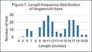 Largemouth Bass Age Chart Harlem Meer Centrarchid Survey Nys Dept Of Environmental