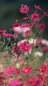 Flower Wallpaper For Samsung Galaxy ...