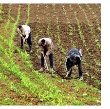 Chlef: Halte au détournement du foncier agricole