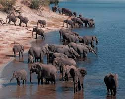 best elephants images animals wild animals elephants at the water